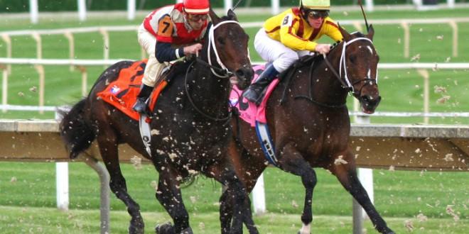 At Yarışı Sonuçları Lingfield Park 29 Ekim 2020