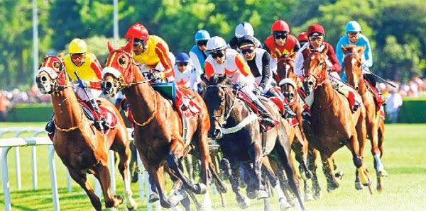 At Yarışı Sonuçları Ankara 23 Temmuz 2019